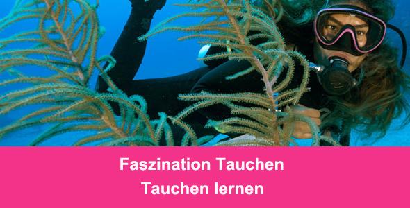 Banner-tauchen-lernen-Tauchcenter-Wuppertal-Meeresauge