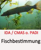 Fischbestimmung