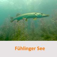 Fühlinger See @ Fühlinger See | Meerbusch | Nordrhein-Westfalen | Deutschland