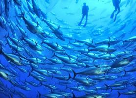 Tauchcenter Wuppertal Meeresauge Gozo Malta Fischschwarm