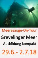 Tauchcenter-Wuppertal-Meeresauge-Grevelinger-Meer-2018