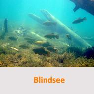 Tauchcenter-Wuppertal-Meeresauge-Tauchplätze-Blindsee
