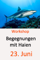 Tauchcenter-Wuppertal-Meeresauge-Workshop-Haie-Shark_protect