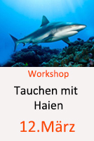Tauchcenter-Wuppertal-Meeresauge-Workshop-Haie-Sharks