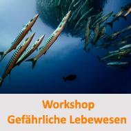 Tauchcenter-Wuppertal-Meeresauge-Workshop-Hinweis-gefährliche-lebewesen-im-meer
