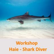 Tauchcenter-Wuppertal-Meeresauge-Workshop-Hinweis-shark-diver