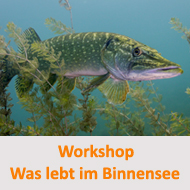 Tauchcenter-Wuppertal-Meeresauge-Workshop-Hinweis-was-lebt-im-binnensee