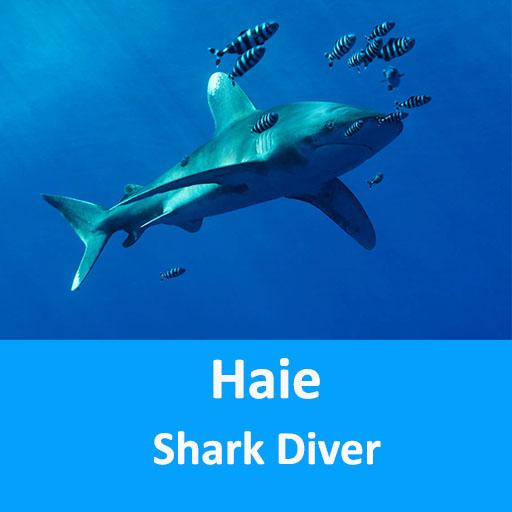 Haie - faszinierende Tiere und keine Monster @ Online Workshop - E Learning