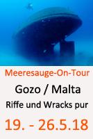 Tauchcenter-Wuppertal-Meeresauge-Wrack-Riffe-Gozo-Malta