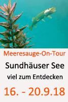 Tauchcenter-Wuppertal-Meeresauge-Wrack-Sundhäuser-See-2018