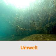 Tauchcenter-Wuppertal-Meeresauge-umwelt