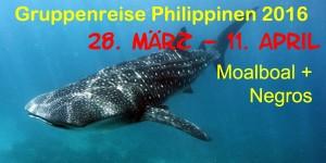 Tauchcenter-Wuppertal-Meeresauge_Tauchreise-Philippinen-Negros-Moalboal-Cebu