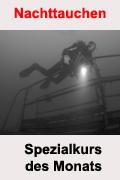 Tauchcenter-Wuppertal_Meeresauge-Specialty-Spezialkurs-Nachttauchen