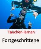 Tauchcenter-Wuppertal_Meeresauge-Tauchen_lernen-Fortgeschrittenenkurs-Tauchen