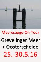 Tauchcenter_Wuppertal-Tauchreise-Grevelinger_Meer