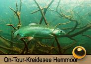 Tauchcenter_Wuppertal-Tauchreise-Hemmoor-2015-006