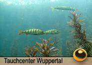 Tauchcenter_Wuppertal_Meeresauge-Sundhaeusersee-004